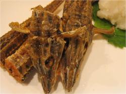 八角の唐揚げレシピ【食の和音~美味しいものは心と体に効きます~】